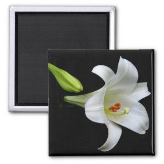 Lily Fridge Magnets
