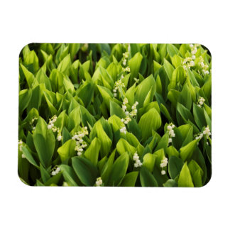 Lily of the Valley Flower Patch Rectangular Photo Magnet