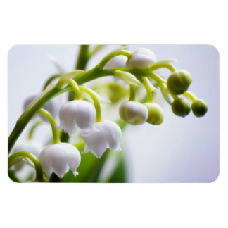 Lily of the Valley Flowers Magnet