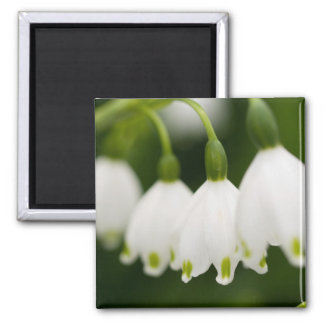 Lily of the Valley Magnet Magnet