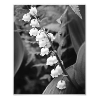 Lily of the Valley Photo Art