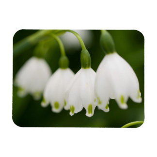 Lily of the Valley  Premium Magnet Vinyl Magnets