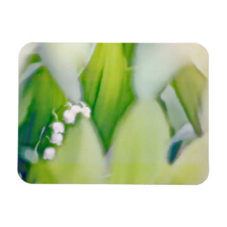 Lily of the Valley Sketch Magnet