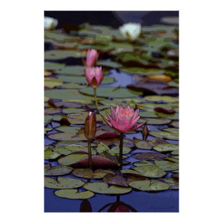 Lily Pad Art Posters