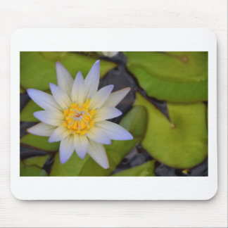 Lily pad mouse mat