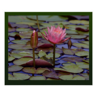 Lily Pad Photo Prints Posters