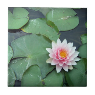 Lily Pad Pond Flower, Pink and Green Photo Tile