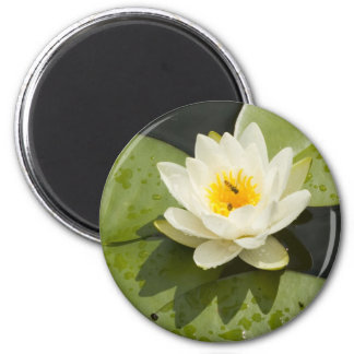 Lily Pads and White Lotus Flower 6 Cm Round Magnet