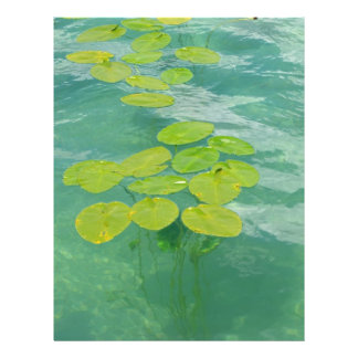 Lily Pads Flyer