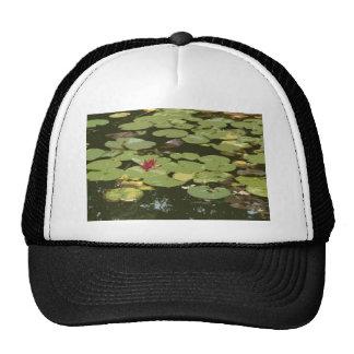Lily pads Impressionism Art Cap