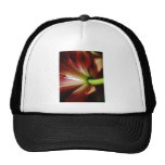 Lily perspective mesh hats