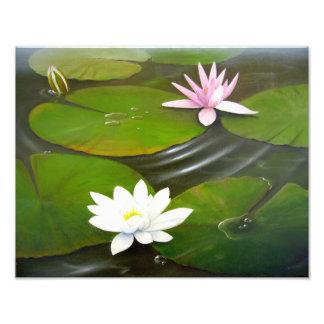 Lily Pond Photo Print