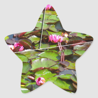 Lily pond times four star sticker