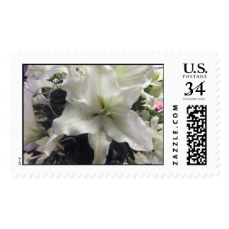 Lily Postcard Stamp
