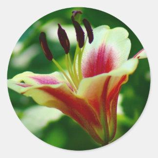 Lily Classic Round Sticker