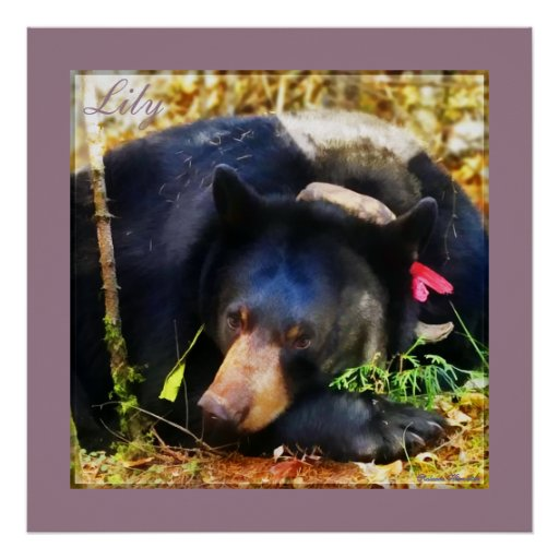 Lily the Black Bear with Ribbons Poster