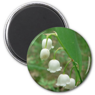 Lily White Flowers Magnets