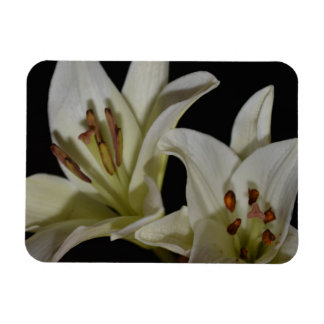 Lily White Flowers Peace Love Smile Grace Juanita Rectangle Magnets