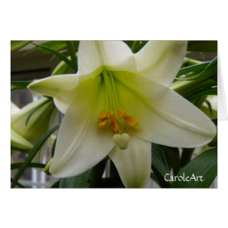 """""""Lily White"""" Greeting Card"""