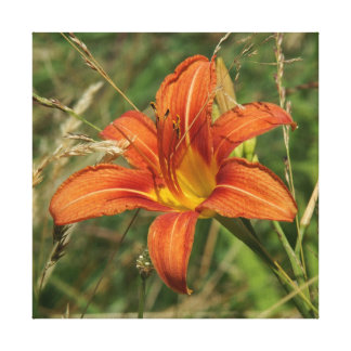 Lily, Wrapped Canvas Print.
