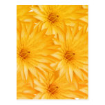 Lily yellow classy post card