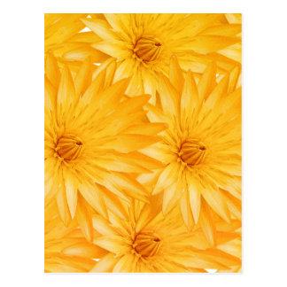 Lily yellow classy postcard