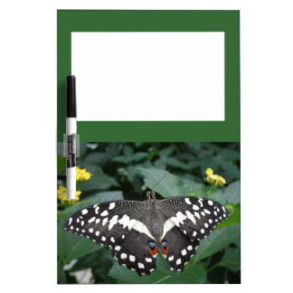 Lime Butterfly and Flowers Memo Board