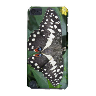 Lime Butterfly iPod Case
