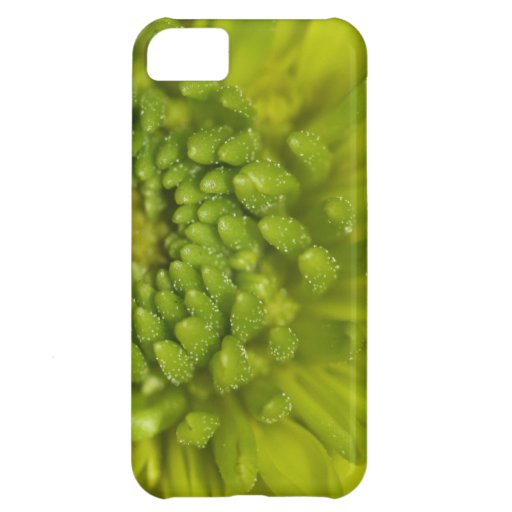 Lime Button Mum Macro Cover For iPhone 5C
