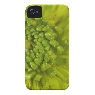 Lime Button Mum Macro iPhone 4 Case-Mate Case