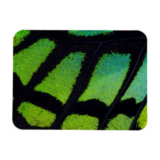 Lime green and black butterfly wing rectangular photo magnet