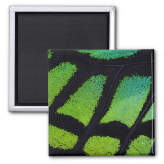 Lime green and black butterfly wing square magnet
