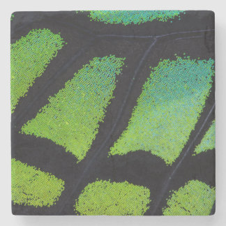 Lime green and black butterfly wing stone beverage coaster