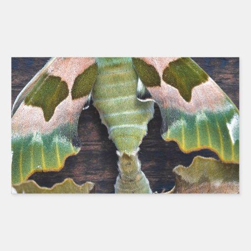 Lime Hawk Moths Rectangle Sticker