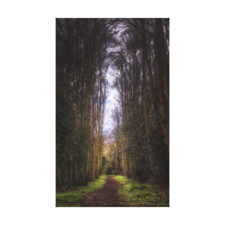 Lime Tree Path Stretched Canvas Prints