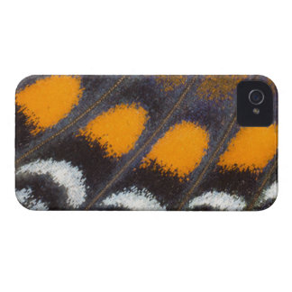 Limenitis astyanax male North American iPhone 4 Case-Mate Cases