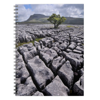 Limestone pavement - Yorkshire Dales Notebook