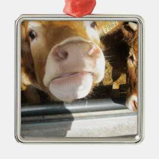 Limousin Brown Cow Silver-Colored Square Decoration