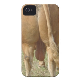 Limousin Bull Butt iPhone 4 Cover