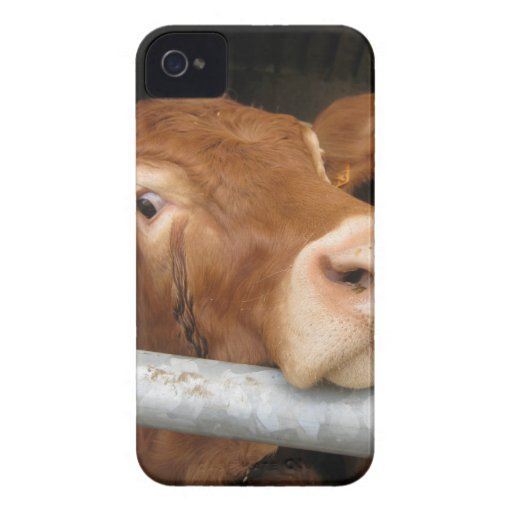 Limousin Cattle (Mad Cow) iPhone 4 Case-Mate Cases