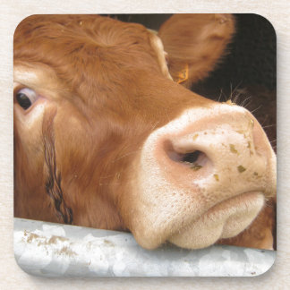 Limousin Cattle (Mad Cow) Drink Coaster