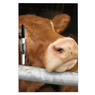 Limousin Cattle Mad Cow Dry-Erase Boards