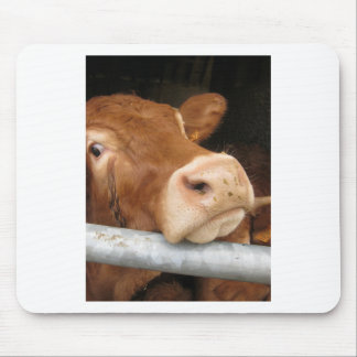 Limousin Cattle Mad Cow Mouse Mat