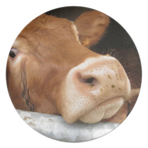 Limousin Cattle (Mad Cow) Party Plate