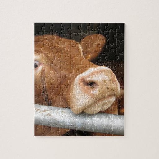 Limousin Cattle (Mad Cow) Puzzles