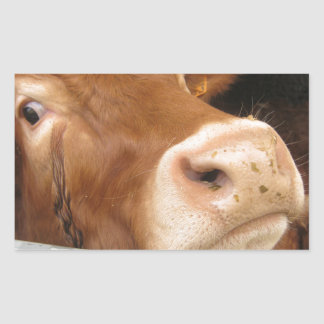 Limousin Cattle (Mad Cow) Stickers