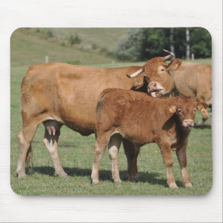 limousin cow and calf mousepad