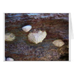 Limpets 2 card