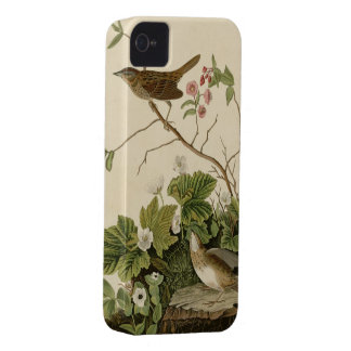 Lincoln Finch iPhone 4 Cover