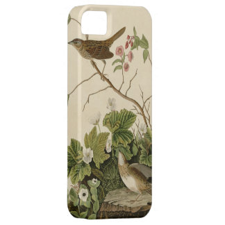 Lincoln Finch iPhone 5 Cover